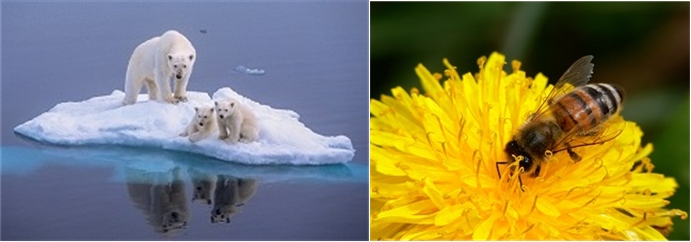 Of Polar Bears and Honey Bees