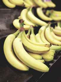 Bananas — used in going bananas over climate change post